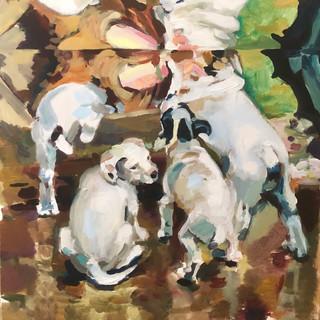Kaleidoscope of Puppies
