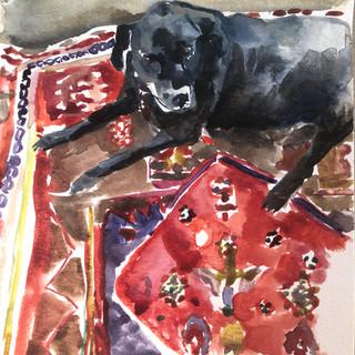 Buddy on rug