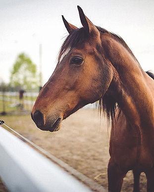 Tarif séance ostéopathie cheval