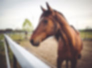 cavalo marrom animal