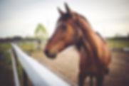 Coaching mit Pferden nach der Raidho Methode bei Burnout und Stress fü Achtsamkeit, Kommunikation und Beziehung.
