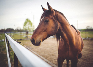 Horse Vaccines:  What You Need to Know