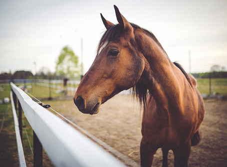When a Car Hits a Horse: What's the Law?