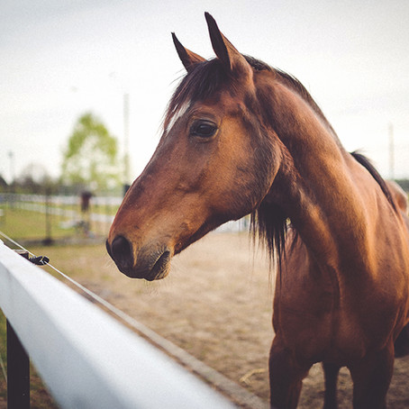 What this horse taught us about failure