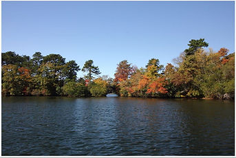 my waterfront on Middle Pond.JPG