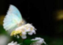 OpalButterfly&Bee.jpeg