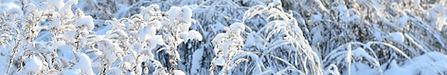 snowongrass.jpg