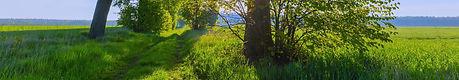 suninfieldtree_edited_edited_edited.jpg