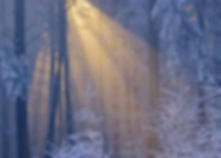 SnowyForest_edited.jpg