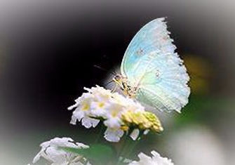 OpalButterfly%252526Bee_edited_edited_ed
