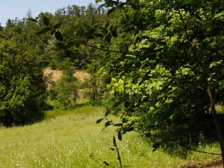 Mt. Pisgah Meadow