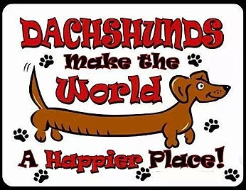 davis darling doxies, dachshunds North Florida puppies for sale
