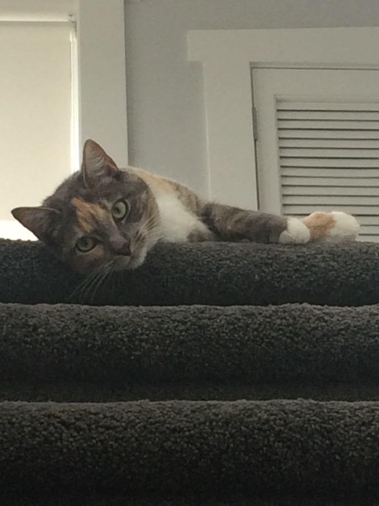 Auckland cat sitter