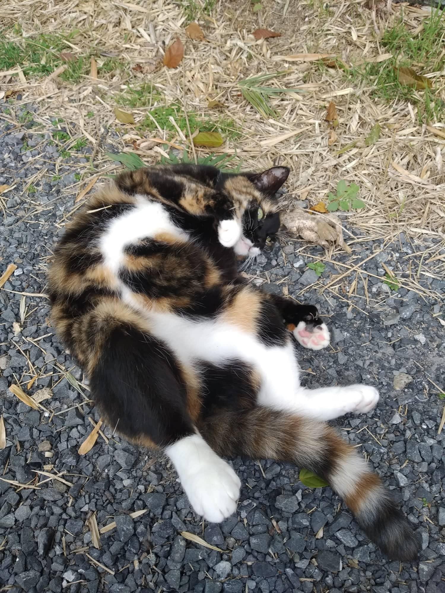 Auckland pet sitter