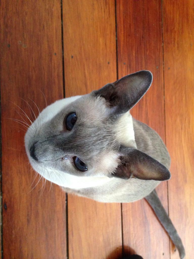 Auckland cat whisperer