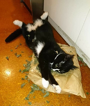 Little Winkie & a bag of Cat Nip - Felin