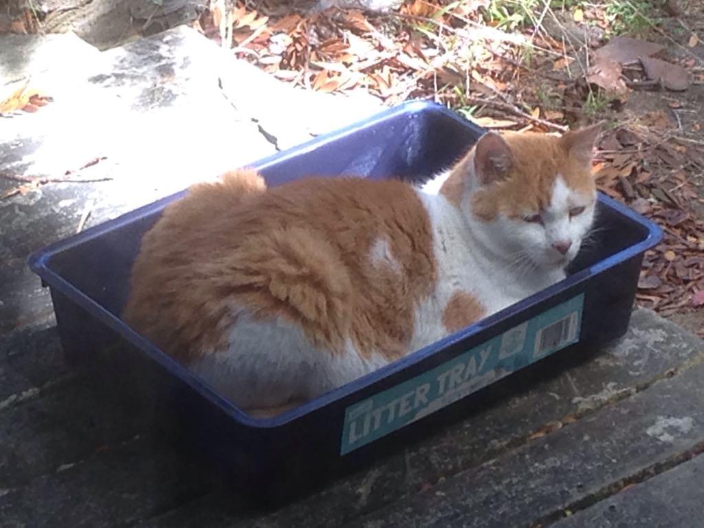 Auckland cat sitting