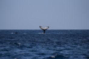 whale-1118876_1920.jpg