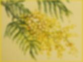Fresque mimosa de Pascaline Bossu, Kokkino Home, Grèce
