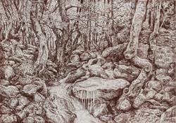 Sous bois et ruisseau
