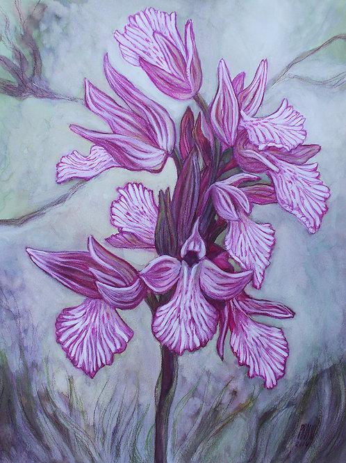 R-Orchidées-02