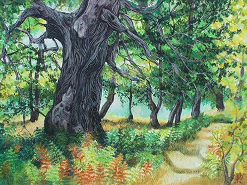 RA3-Forêt de Thassos Grèce
