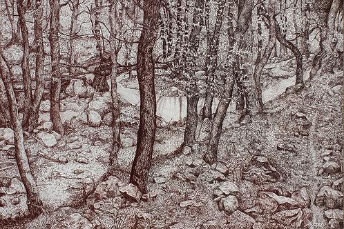 R-Forêt platanes sanguine de Thassos Grèce
