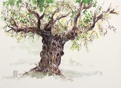 olivier-arbre