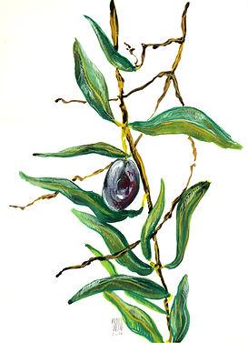 Croquis à l'encre de Pascaline Bossu, olive, Péloponèse Grèce