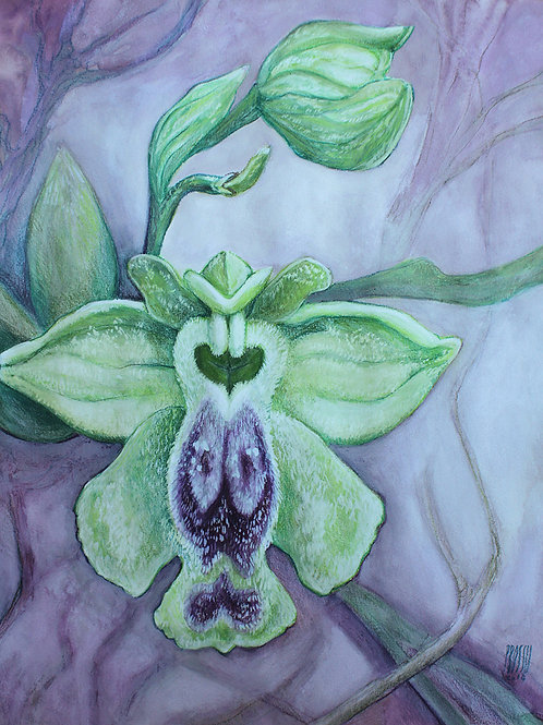 R-Orchidées-01