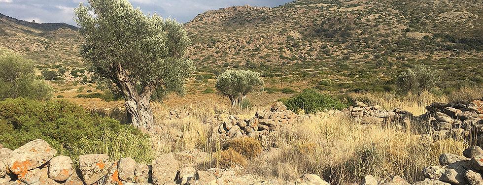 BANDE-oliviers.jpg