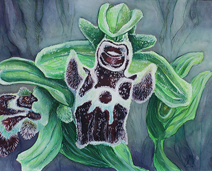 ORCHIDEE sauvage