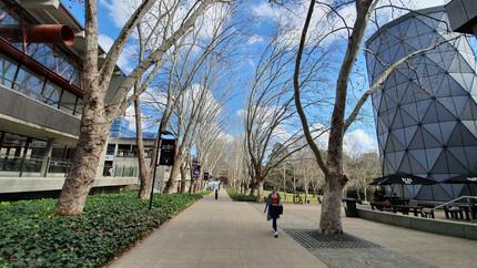 Adoro essa foto, parece uma pintura. É a Wally's Walk, rua principal do Campus, próximo ao prédio do Departamento de Estudos em Educação.