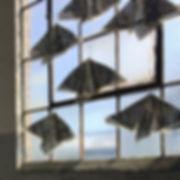 Moths by Riva Weinstein