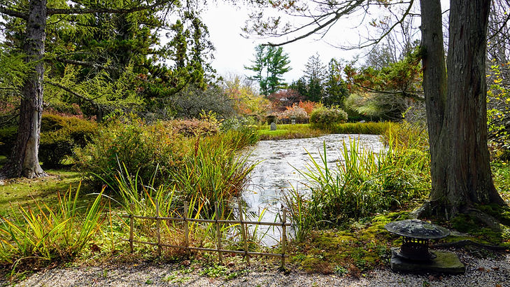 a stream to feed her new pond, with water flowing over stones and more iris growing on the banks