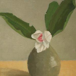 Magnolia in Tokkuri