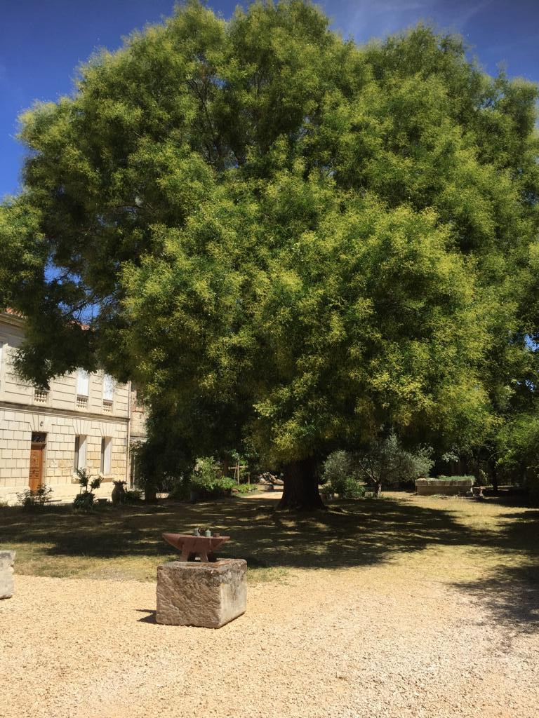 Magischer Baum auf Tavernel