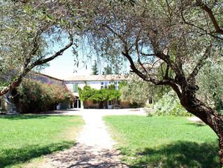 Vinum Romanum – gelebte Weinvergangenheit