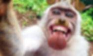 monkeyfilterselfieinsta.jpg