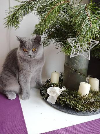 Wicca vánoční.jpg