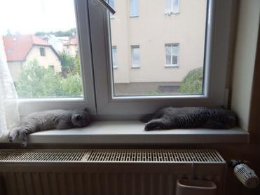 Koťatka při odpočinku.JPG