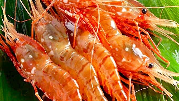 Live Amaebi (Sweet Shrimps)