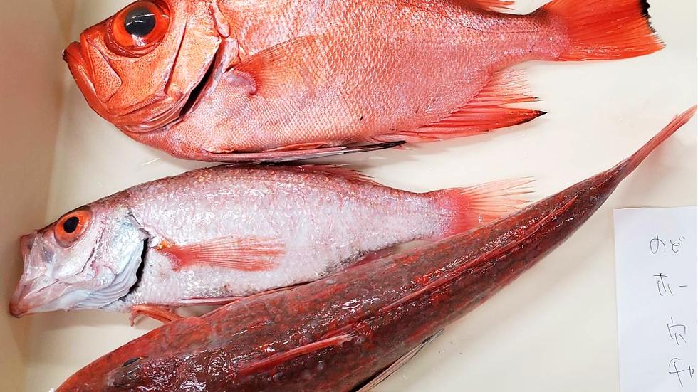 Fresh Fish Box from Japan