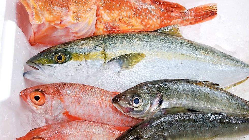 Premium Fresh Fish Box from Japan
