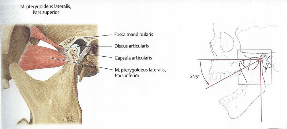 Kiefergelenk