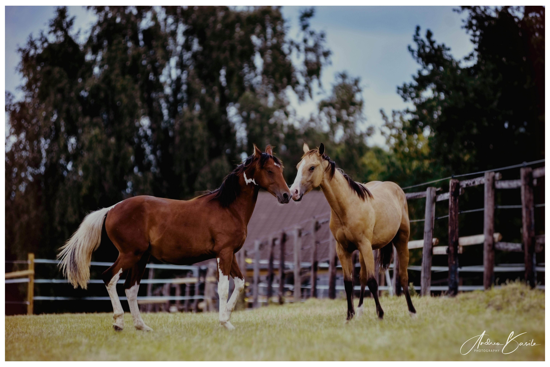 Pferdefotografie & Hundefotografie