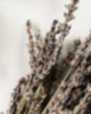 Lavender 1 A.jpg
