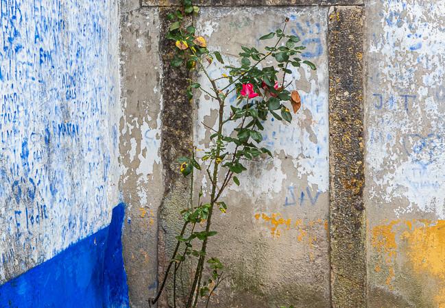 Red_Rose__Ancient_Doorway.jpg