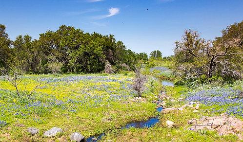 Bluebonnet Creek