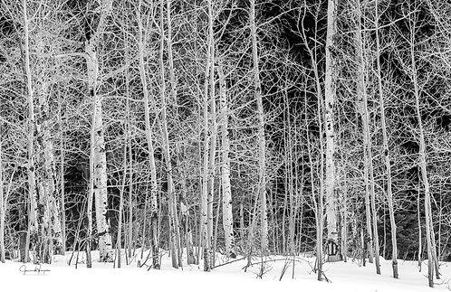 Aspen in White 1/50